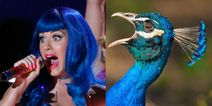 When Your Favorite Celebrity Pop Star Is A Bird